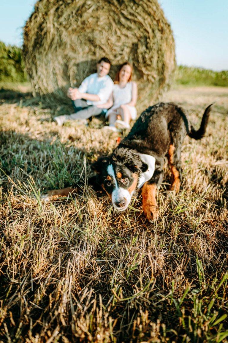 ritratti di coppia con cane in estate in colline di chianti in toscana